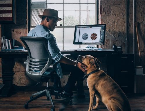 How to Train a Pup to Respect Your Home Office